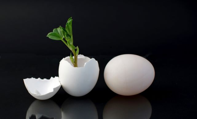 Egg shell with plant growing out of it next to whole egg (against black background)