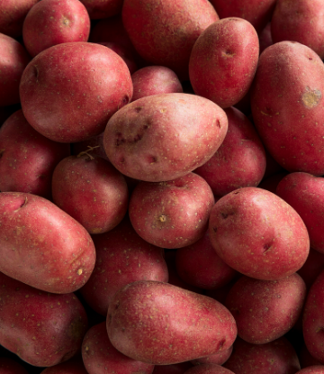 Supply Chain Scene, closeup image of fresh, red potatoes