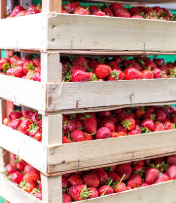 SCS, image of stacking crates of strawberries