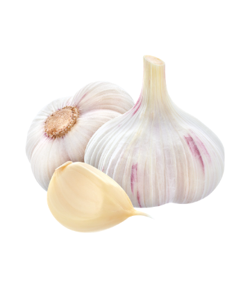 SCS, image of fresh garlic bulb and clove