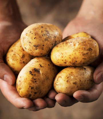 SCS, image of hands holding fresh whole potatoes