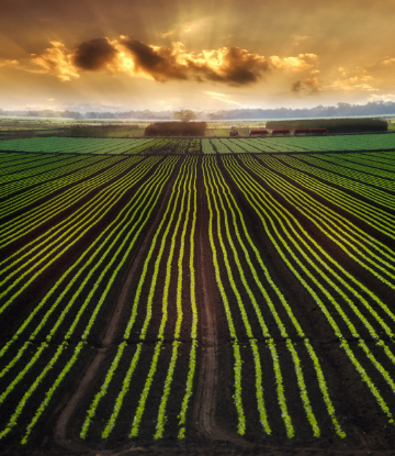 SCS, image of a beautiful crop planted field at sunset