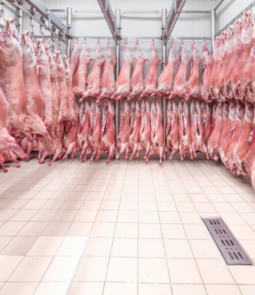 SCS, image of a cold storage meat locker with hanging hog carcases