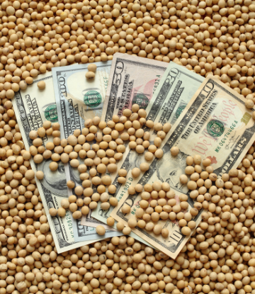 Image of a pile of soybeans with six, 100 dollar bills on top
