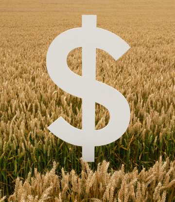 Giant dollar sign graphic in front of a field of grain