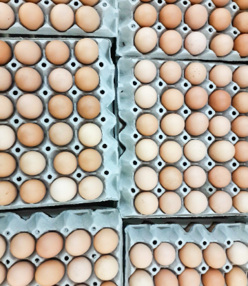 Image of open flat cartons of eggs