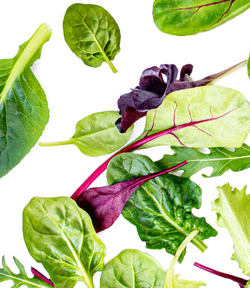 Image of fresh leafy greens on white background